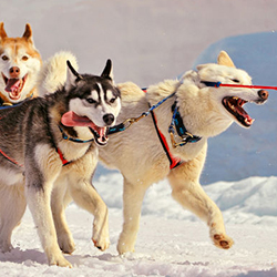 BED AND BREAKFAST AND DOGSLEDDING